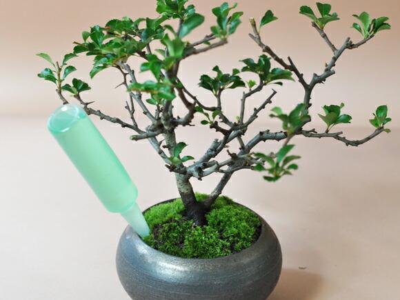 はじめての盆栽道具セット