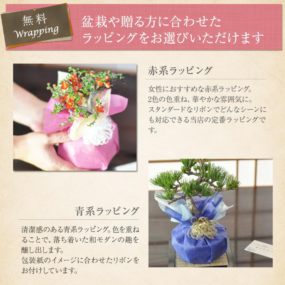 盆栽を贈る方に合わせたラッピングをお選びいただけます