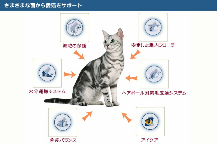 さまざまな面から愛猫をサポート