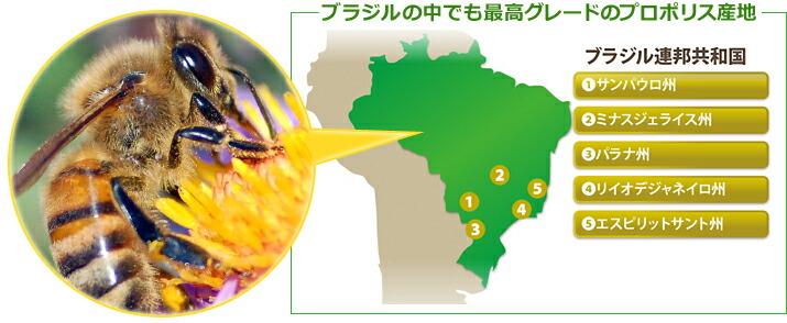 ブラジルの中でも最高グレードのプロポリス産地
