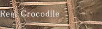 Real Crocodile