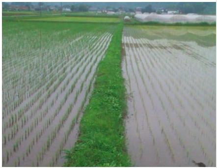 元田農園の田んぼ