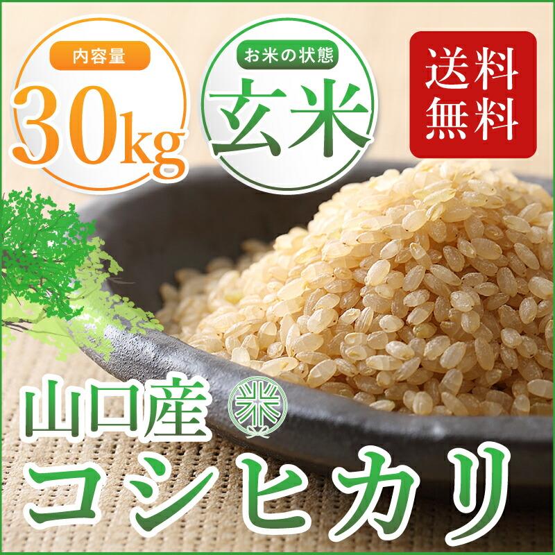 コシヒカリ 玄米30㎏