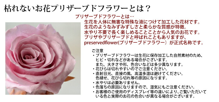 枯れないお花プリザーブドフラワーとは? プリザーブドフラワーとは… 生花を人体に無害な特殊な液につけて加工した花材です。 生花のようなみずみずしさと柔らかな質感が特徴。 水やり不要で長く楽しめることことから人気のお花です。 ブリザやブリザーブドと呼ばれこともありますが、 preservedflower(プリザーブドフラワー)が正式名称です。  ご注意 ・プリザーブドフラワーは生花に保存加工した自然素材のため、ヒビ・切れなどがある場合がございます。  また、大きさや形、色合いなどは多少異なります。 ・花びらは切れやすいのでご注意ください。 ・直射日光、直接の風、高温多湿は避けてください。  色褪せ、花びら切れ等の原因になります。 ・水やりは必要ありません。 ・色落ちの原因になりますので、湿気にもご注意ください。 ・お客様のご使用のディスプレイ等の違いにより、ご覧いただいている色と実際のお花の色合いが異なる場合がございます。