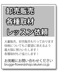 卸売販売・各種取材・レッスン依頼 、大量販売、卸売販売も行っております 価格についてもご要望に添えるよう最大限に努力いたします! 各種取材もご協力します! お気軽にお問い合わせください brugge-flower@shop.rakuten.co.jp