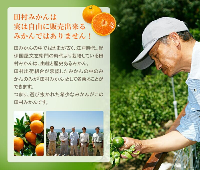 田村みかんは選び抜かれた最高級のみかんです