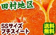 田村地区の有田みかんがお買得!