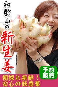 和歌山の新生姜