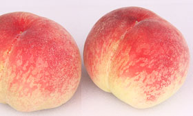 一番人気のあら川の桃です。白鳳