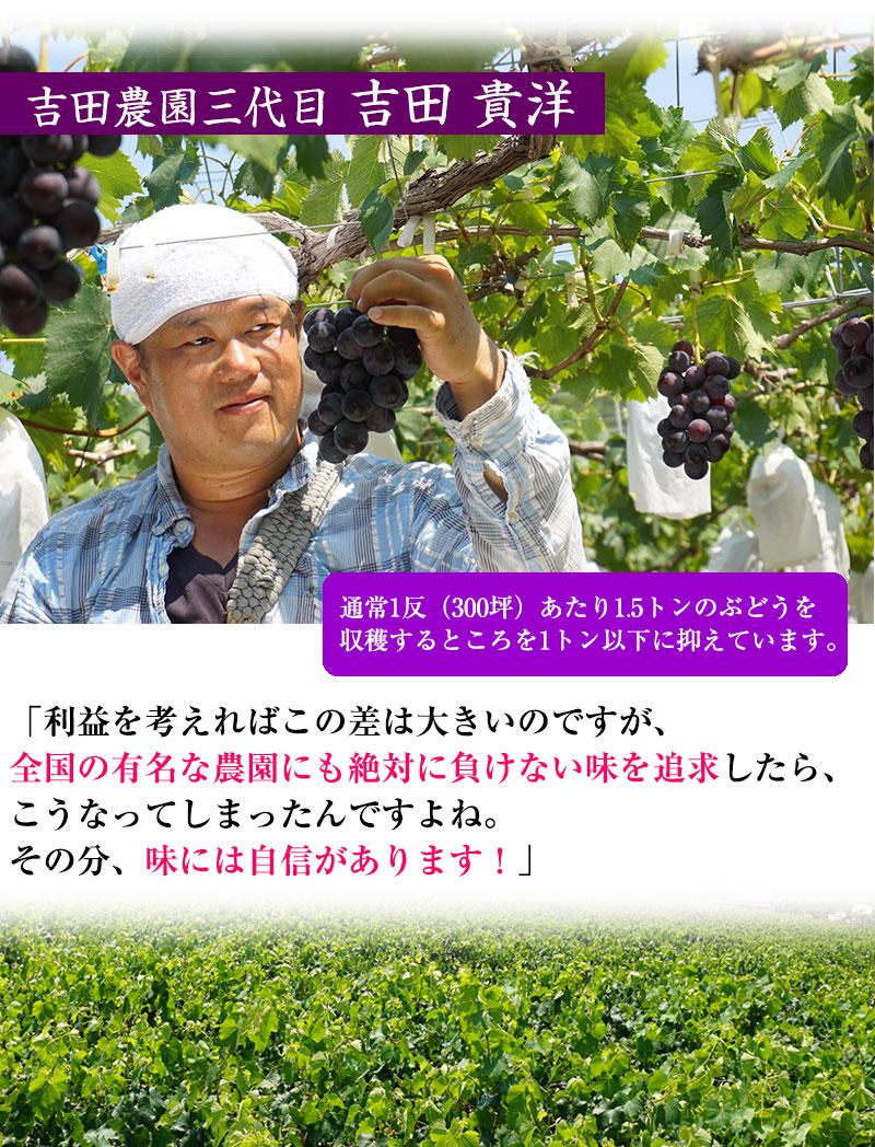 生産者 吉田貴洋さん