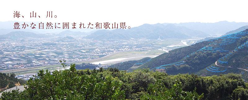 海、山、川。豊かな自然の囲まれたここ和歌山県。