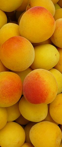 熟した梅は、まるで桃のようないい香り。