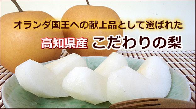 高知県産浩果園の梨