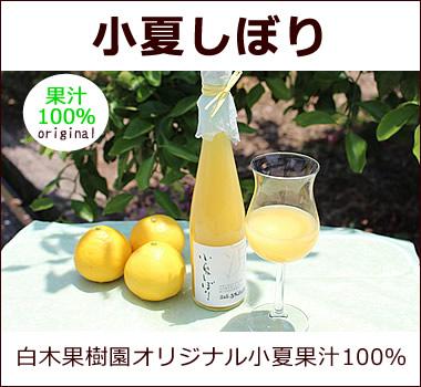 白木果樹園オリジナル。小夏果汁100%無添加ジュース【小夏しぼり】