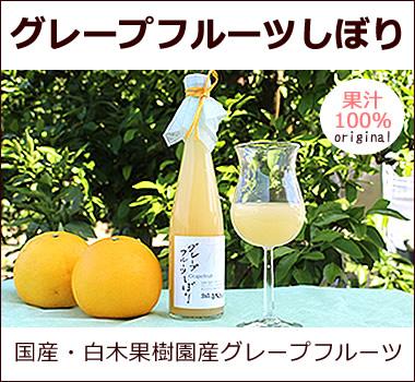 白木果樹園産グレープフルーツ【グレープフルーツしぼり】