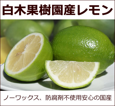 白木果樹園産レモン