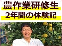 農作業研修生2年間の体験記