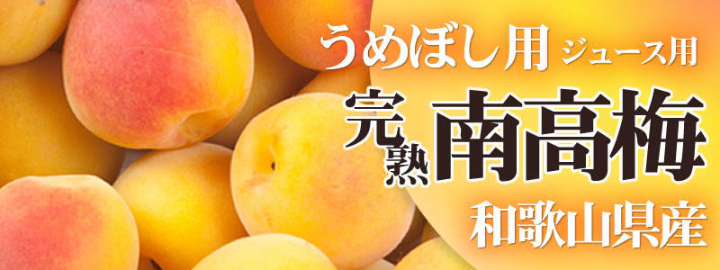 完熟南高梅 梅干し梅ジュース用 和歌山県産