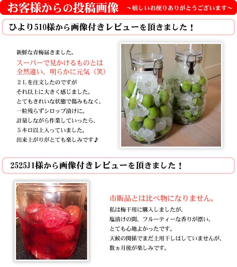 紀州青梅で梅酒を作ったお客様からの投稿画像