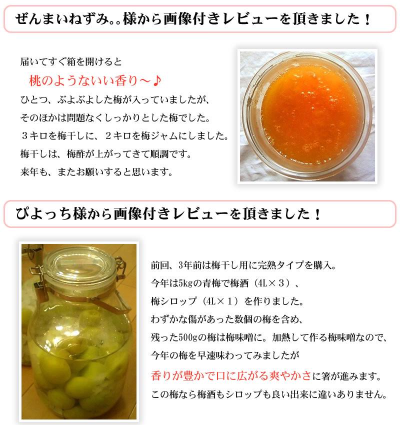 紀州青梅で梅干しを漬けたお客様からの投稿画像