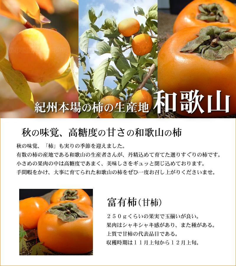 西浦さんの富有柿 完熟収穫
