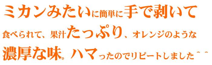 春みかん セミノールオレンジ(濃厚・多果汁)
