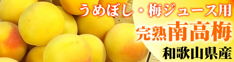 和歌山産 【完熟生梅】南高品種/梅干し・梅酒用