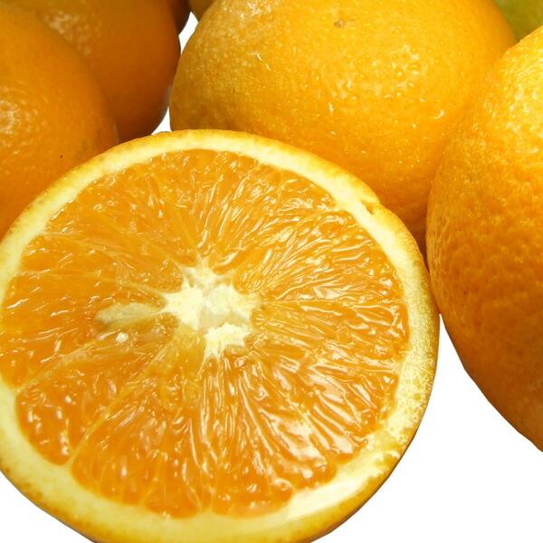国産安心柑橘 バレンシアオレンジ
