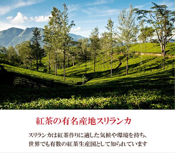 紅茶の有名産地スリランカ