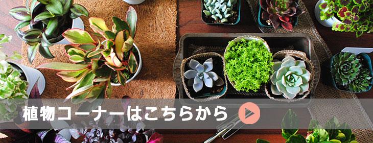 植物カテゴリバナー