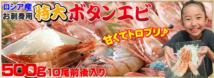 ロシア産 お刺身用 特大ボタンエビ 500g(10尾前後入り) - 1尾あたり50g前後の特大ボタンエビ!濃厚な甘味とぷりっとした食感。まさにエビの王様!