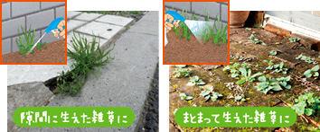 みんなにやさしい除草剤 おうちの草コロリ