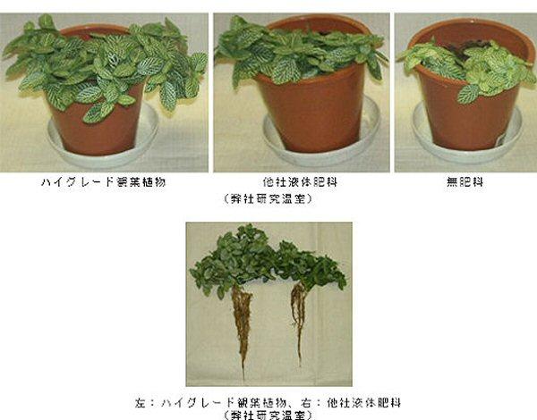 ビタミン類・高純度天然糖質配合により、植物に活力を与えます。葉色を濃くし、生育を促進する効果 があります