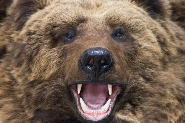 熊撃退スプレー カウンターアソールト・ストロンガー