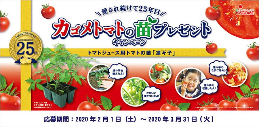 カゴメトマトの苗プレゼント
