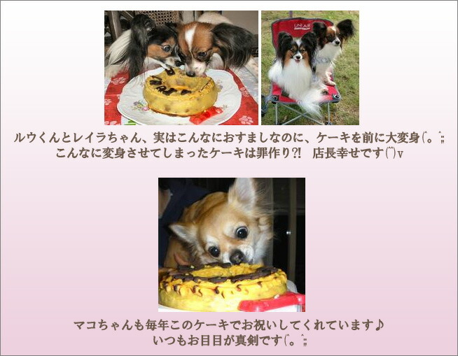 Birthday Cake For Dogs Meat ~ Cani rakuten global market horse meat loaf cake l for dogs cake
