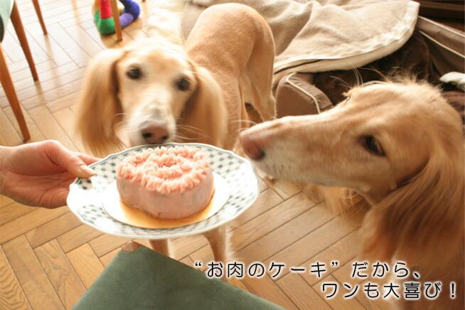 お肉のケーキだから、ワンも大喜び
