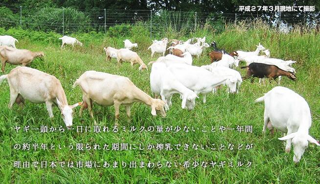 山羊たちの様子