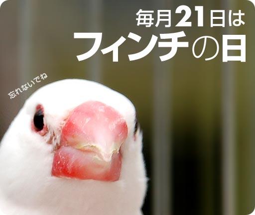 【毎月21日】フィンチの日