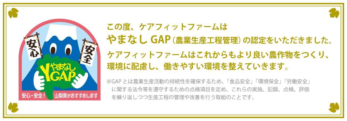 ケアフィットファームはやまなしGAP(農業生産工程管理)の認定をいただきました
