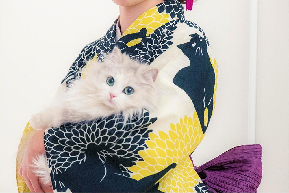 猫柄浴衣と猫