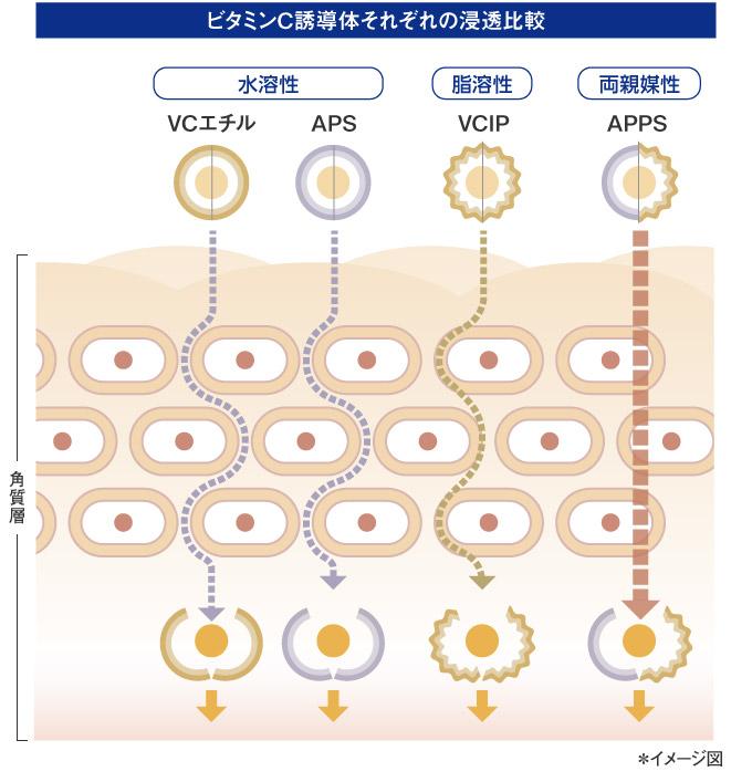 ビタミンC誘導体それぞれの浸透比較