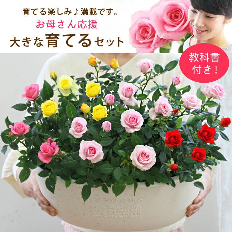 【母の日】送料無料★絆はぐくむローズ!