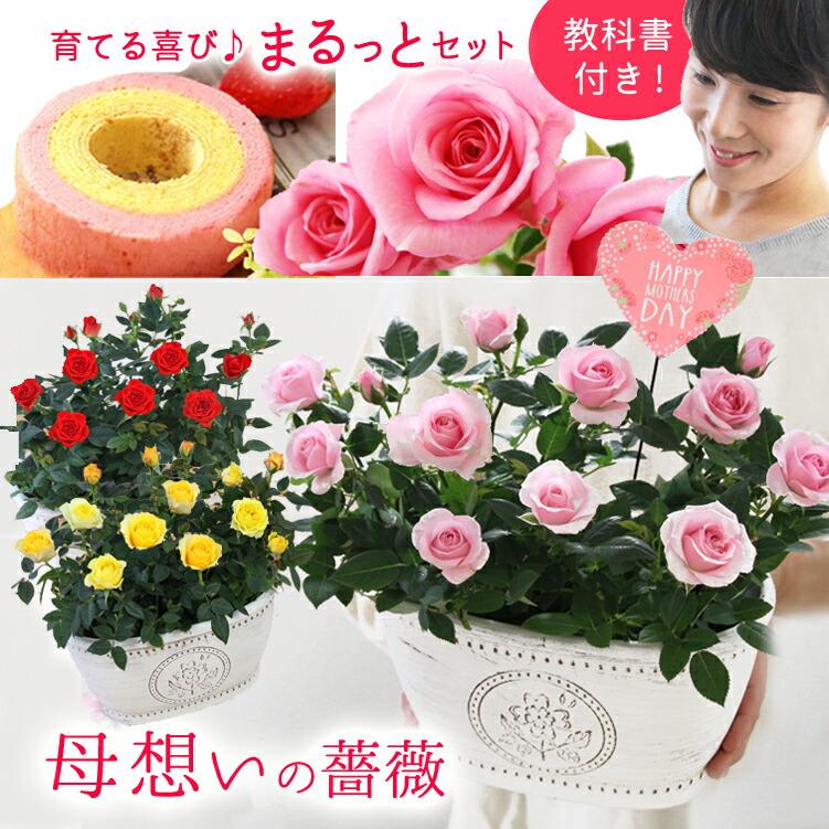 【母の日】送料無料★母想いの薔薇!