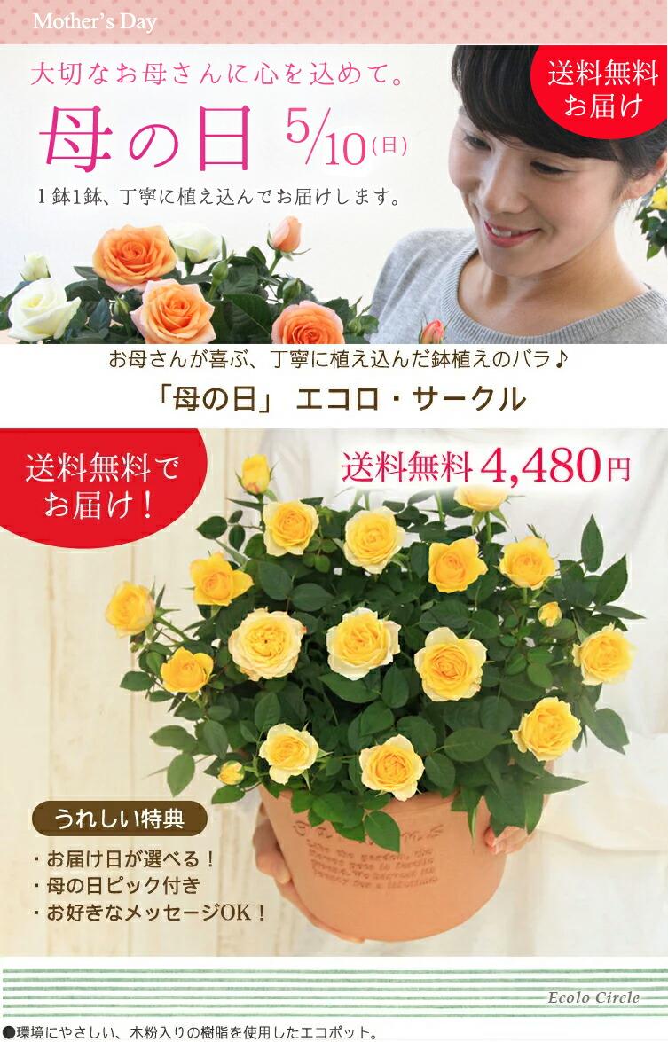 【母の日】送料無料★エコロ・サークル!