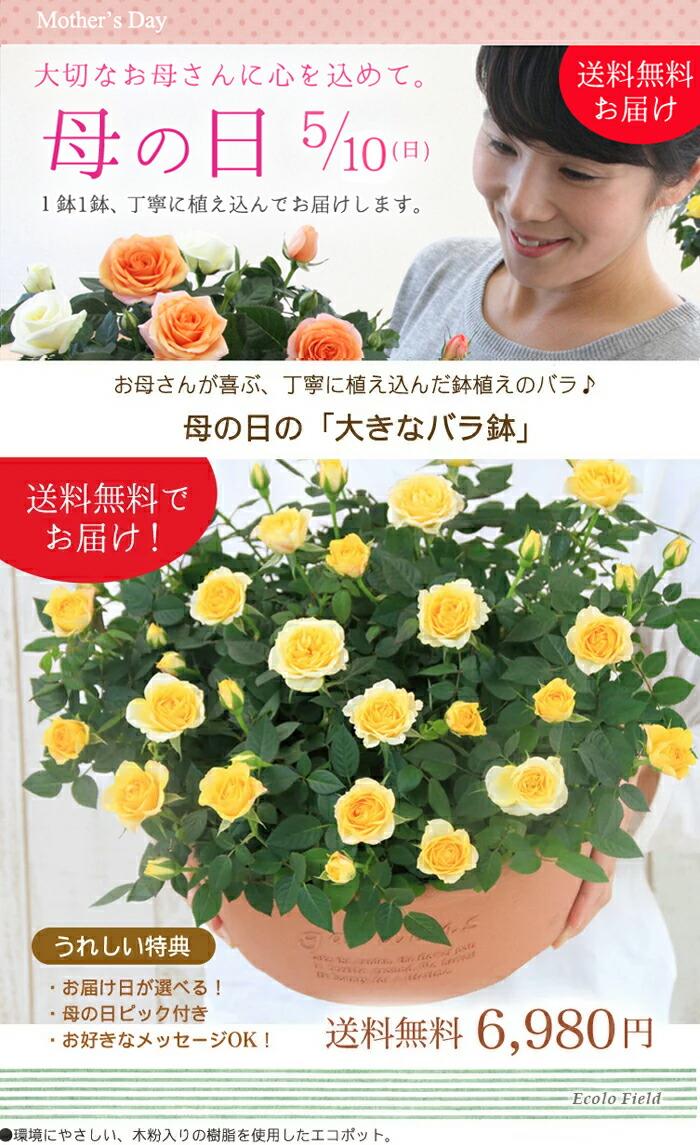 【母の日】送料無料★エコロ・フィールド!