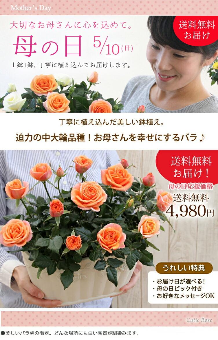 【母の日】送料無料★キューティーローズ!