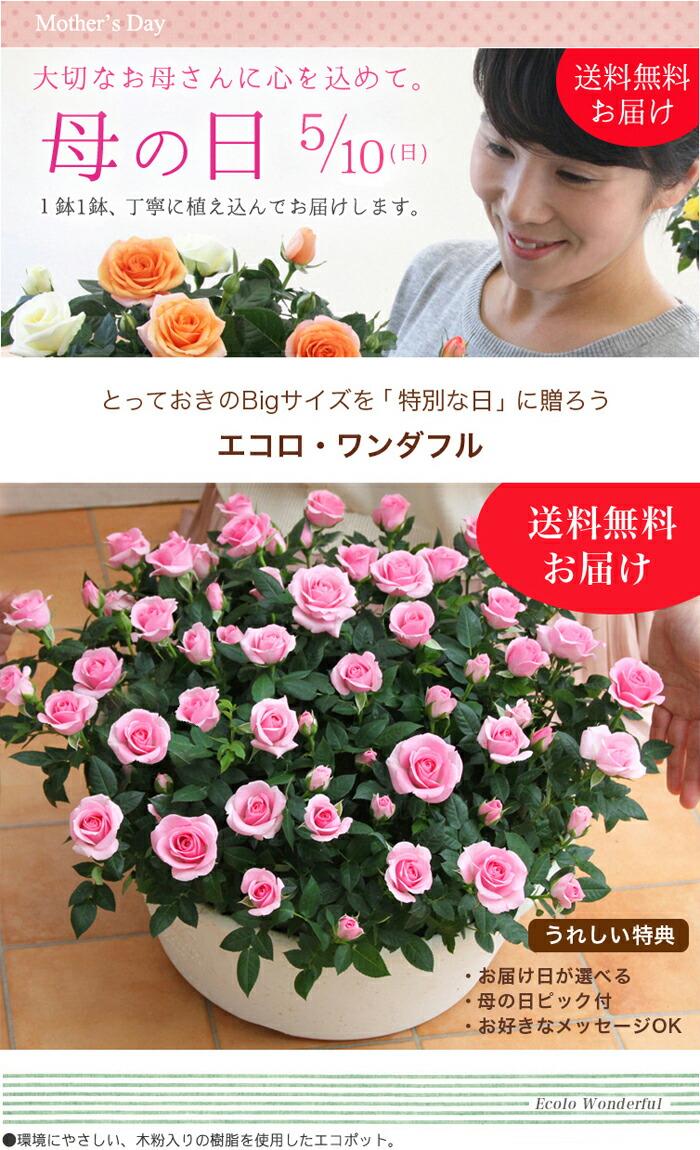 【母の日】送料無料★エコロ・ワンダフル!