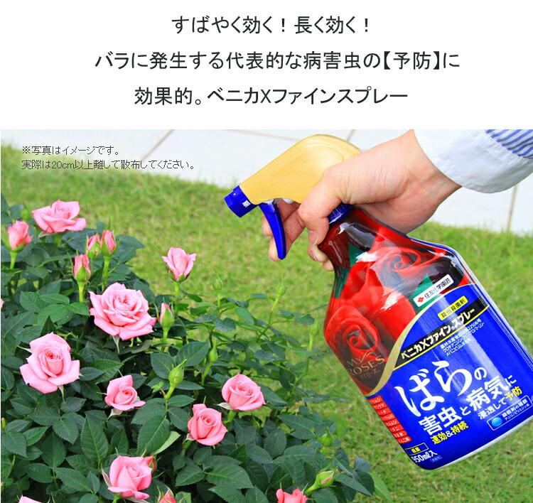 ベニカXすばやく効く!長く効く!バラに発生する代表的な病害虫の予防に効果的。ベニカXファインスプレー