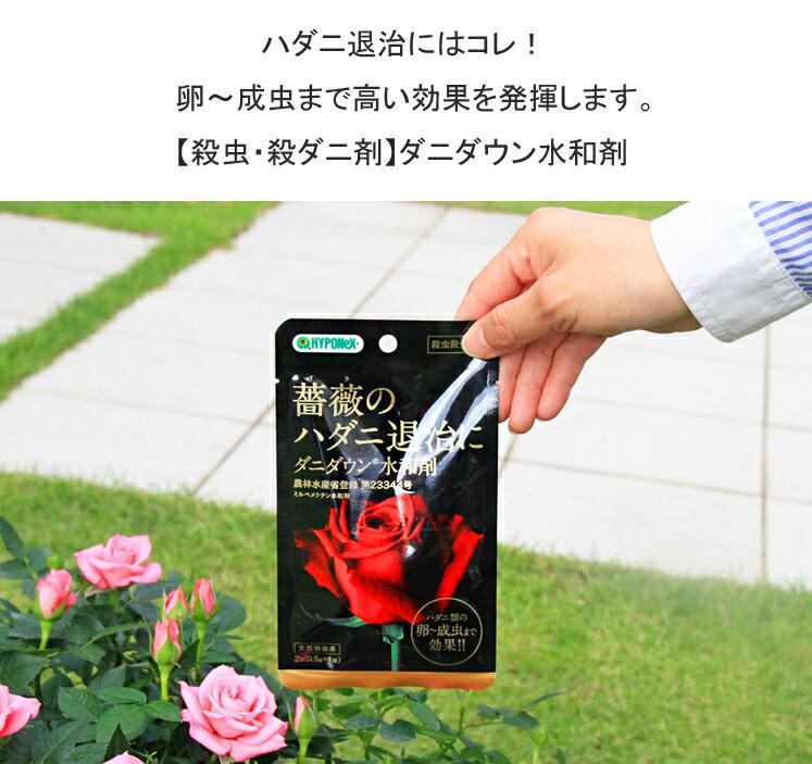 ダニダウン水和剤01ハダニ退治にはコレ! 卵〜成虫まで高い効果を発揮します。【殺虫・殺ダニ剤】